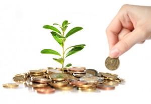 plantar-dinheiro